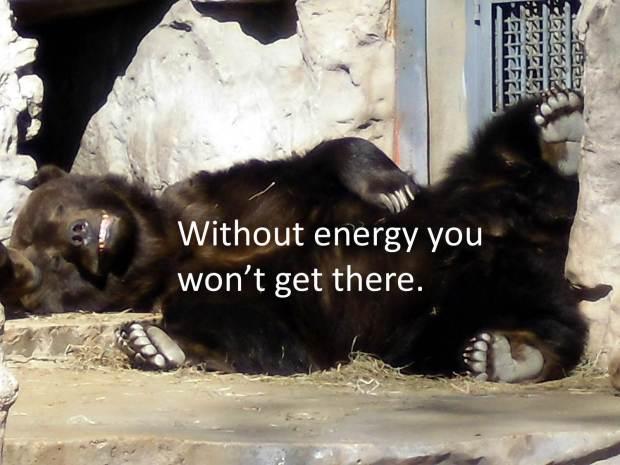 sleepy bear quote