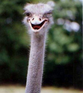 blind ostrich open eyes