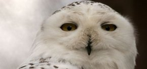 leadership wisdom owl