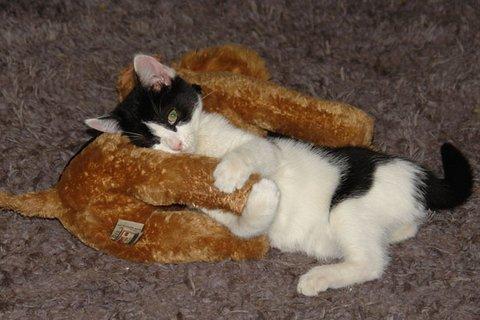 coddling kitten