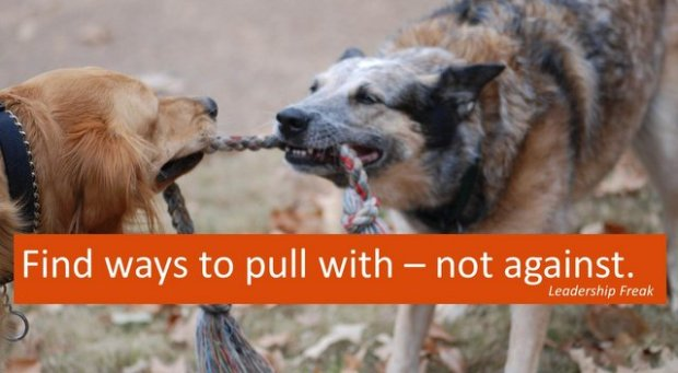dogs pulling on rope