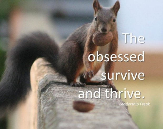 Obsessed squirrel