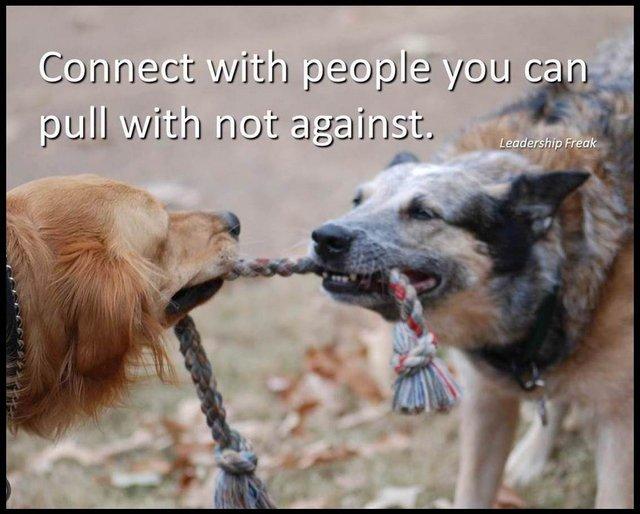 dog tug of war Dogs Stronger Than Pitbull