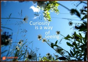 curiosity is a way of seeing-001