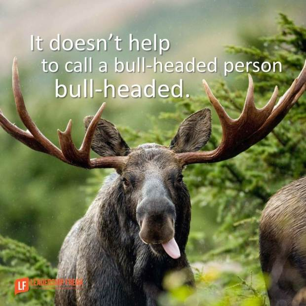 it doesn't help to call a bull-headed person bull-headed