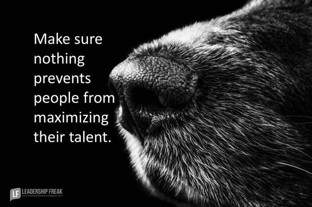 make sure nothing prevents people from maximizing their talent