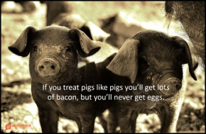 if you treat pigs like pigs you'll get lots of bacon but you'll never get eggs.png