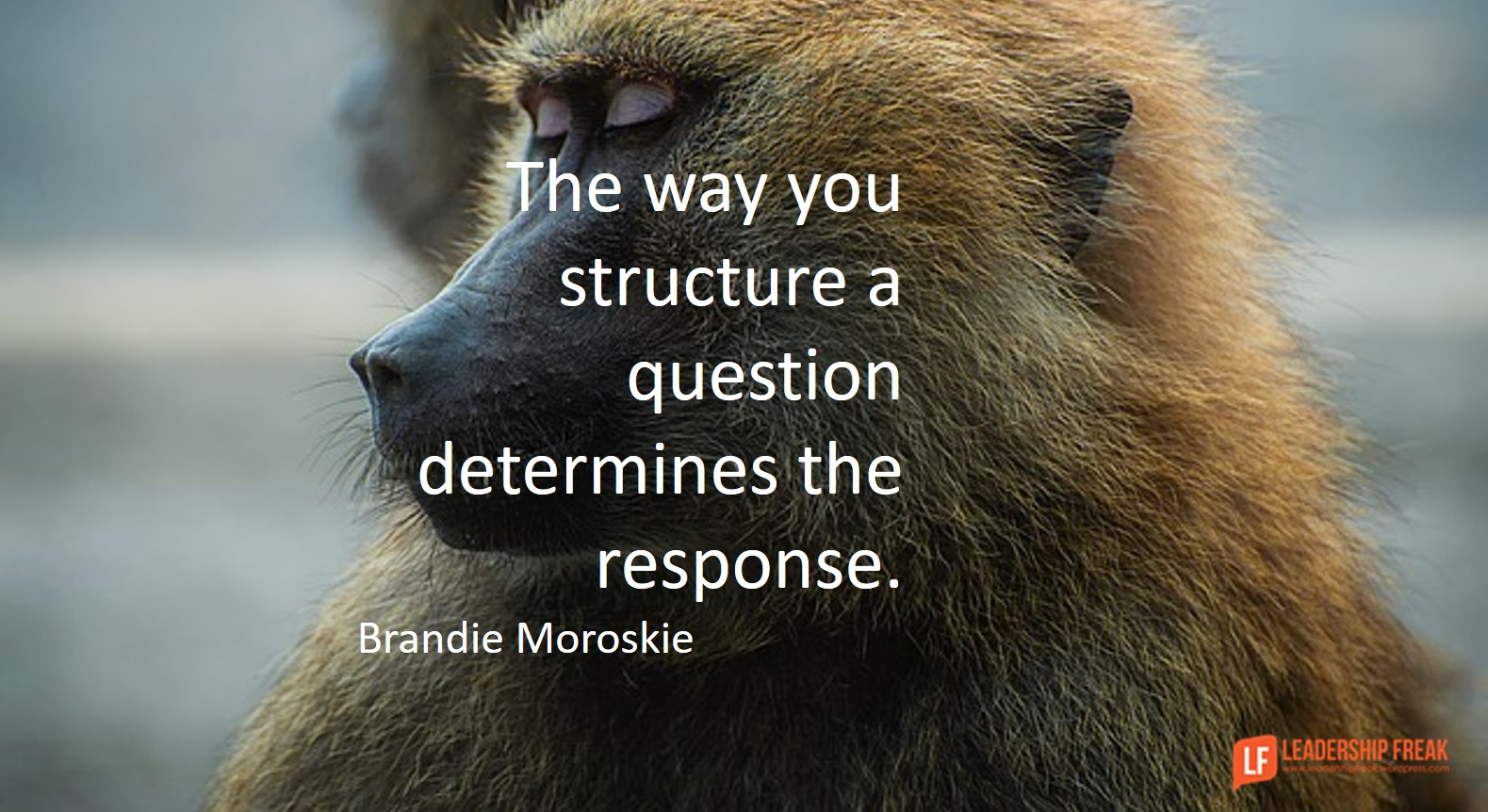 questions leadership freak new questions for managing monkeys