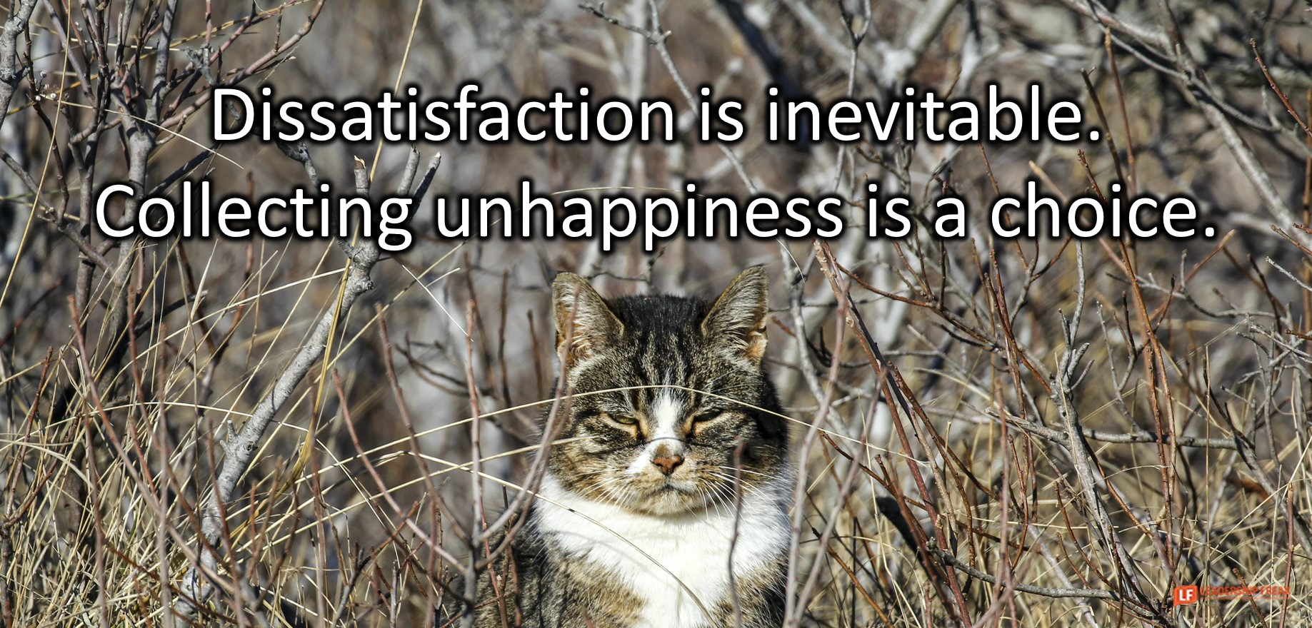 Dissatisfaction isn't the Problem – How to Handle Dissatisfaction