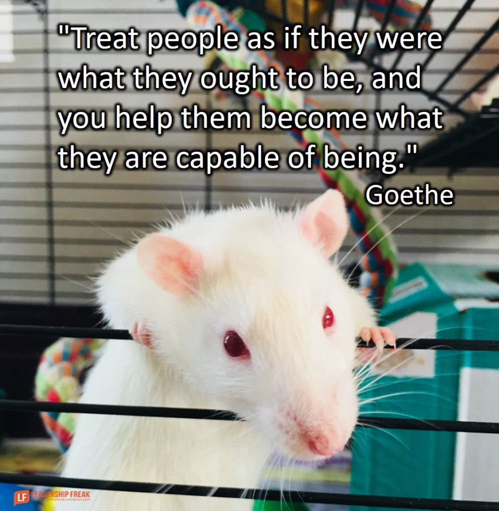 "Rat  ""Treat people as if they were what they ought to be, and you help them become what they are capable of being."" Goethe"