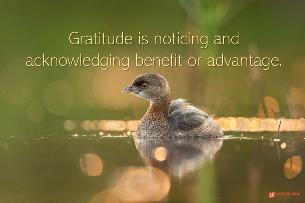 Baby bird  Gratitude is noticing and acknowledging benefit or advantage.