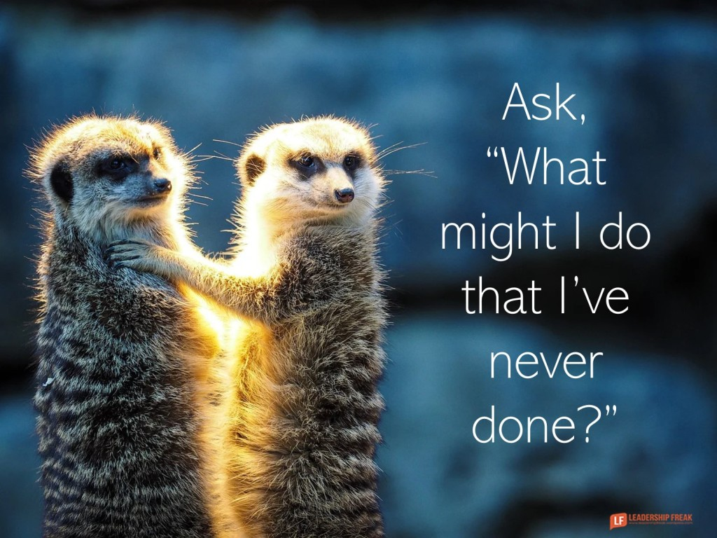 "Meerkats  Ask, ""What might I do that I've never done?"""