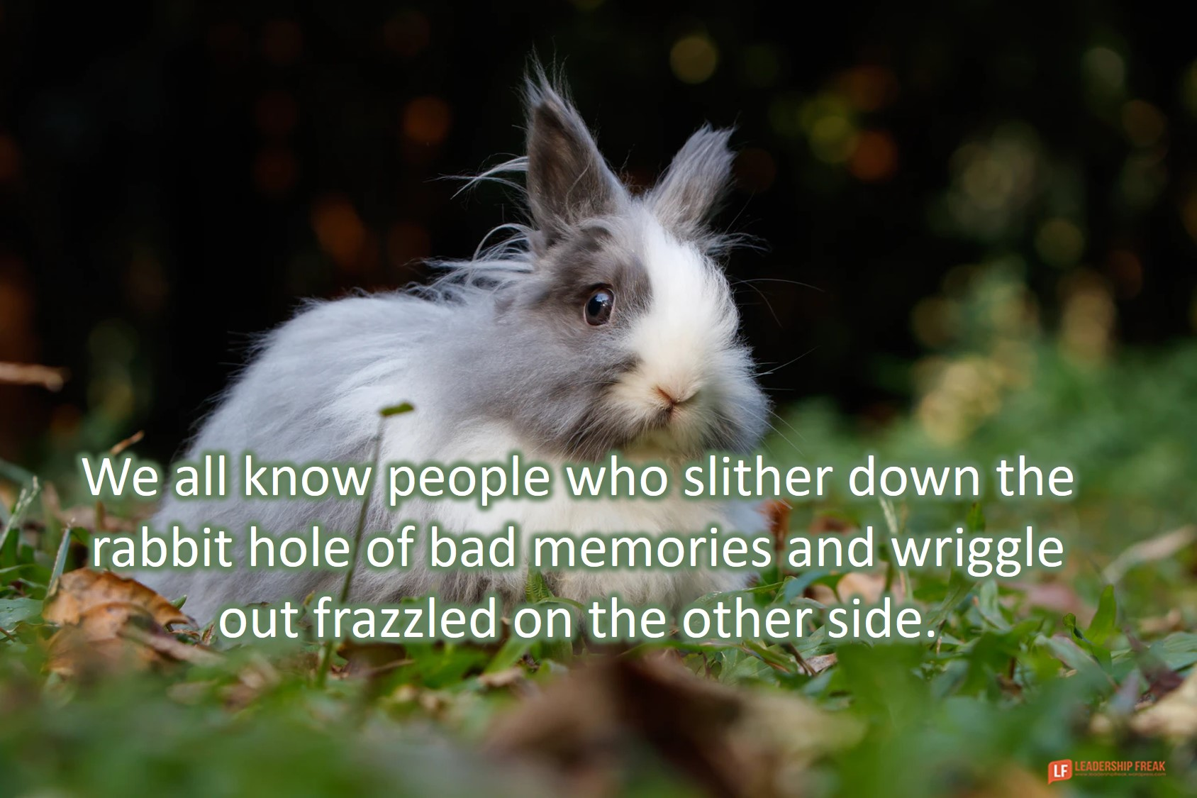 Rabbit  We all know people who slither down the rabbit hole of bad memories and wriggle out frazzled on the other side.