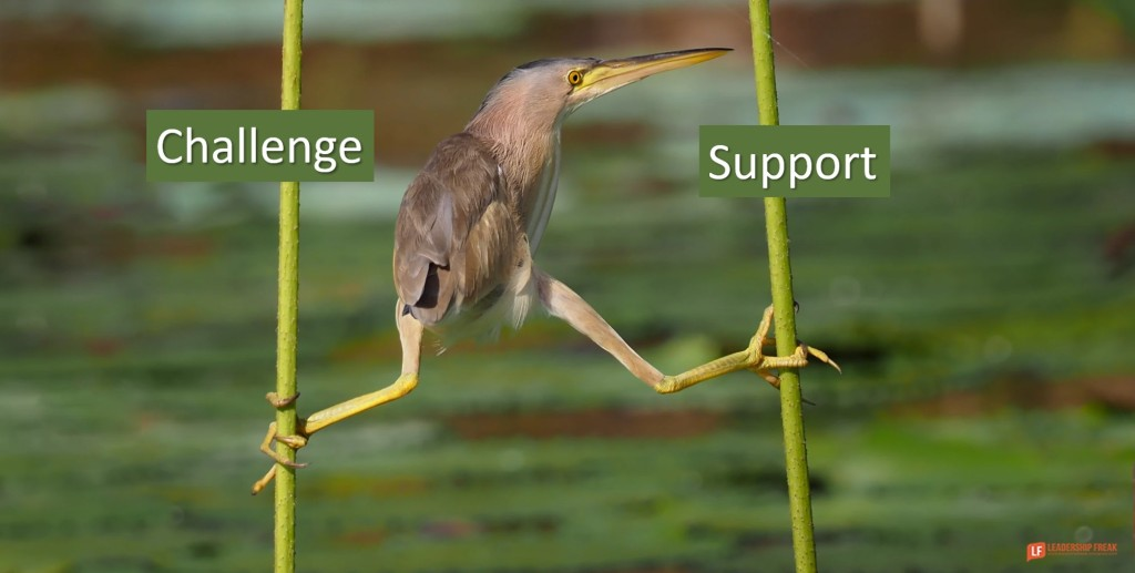 Bird hanging on two stems.  Challenge and Support