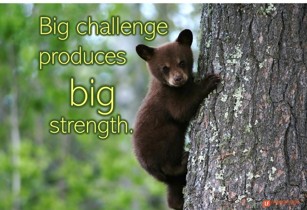 Bear cub climbing a tree.  Big challenge produces big strength.