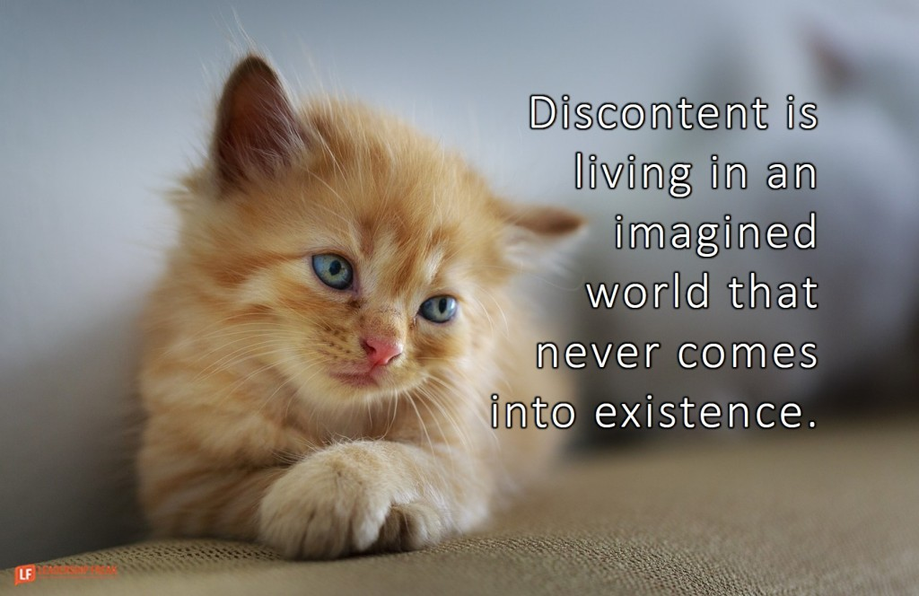 Sad cat.  Discontent is living in an imagined world that never comes into existence.