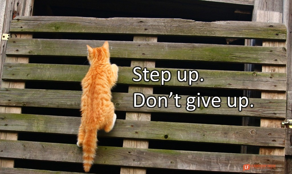Climbing cat.  Step up. Don't give up.