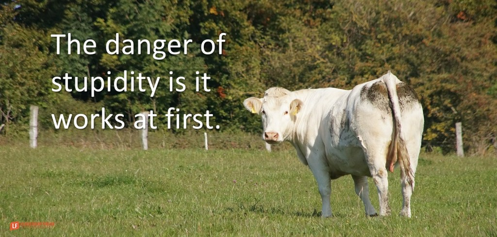 Cow  The danger of stupidity is it works at first.