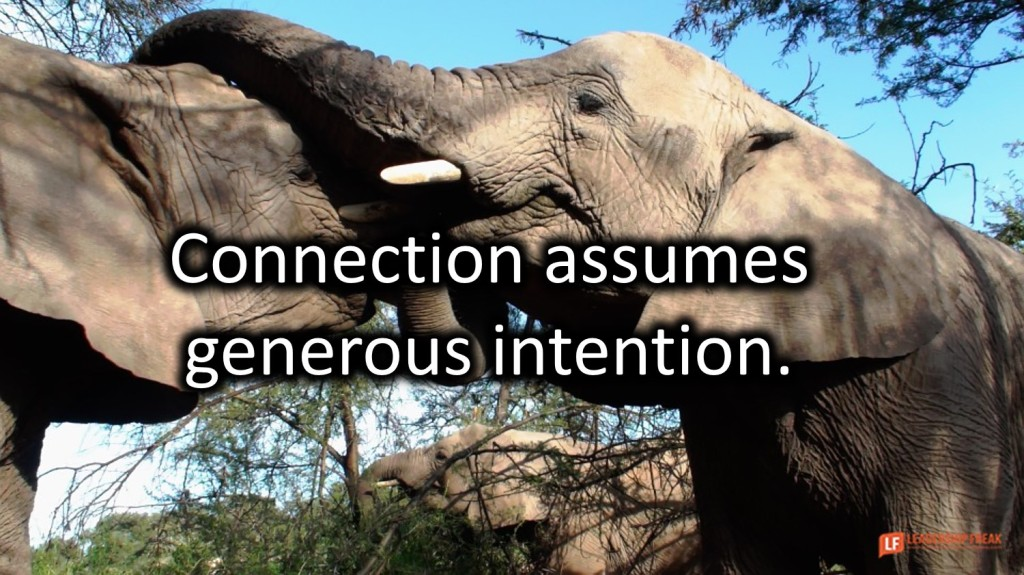 Elephants  Healthy connection assumes generous intention.