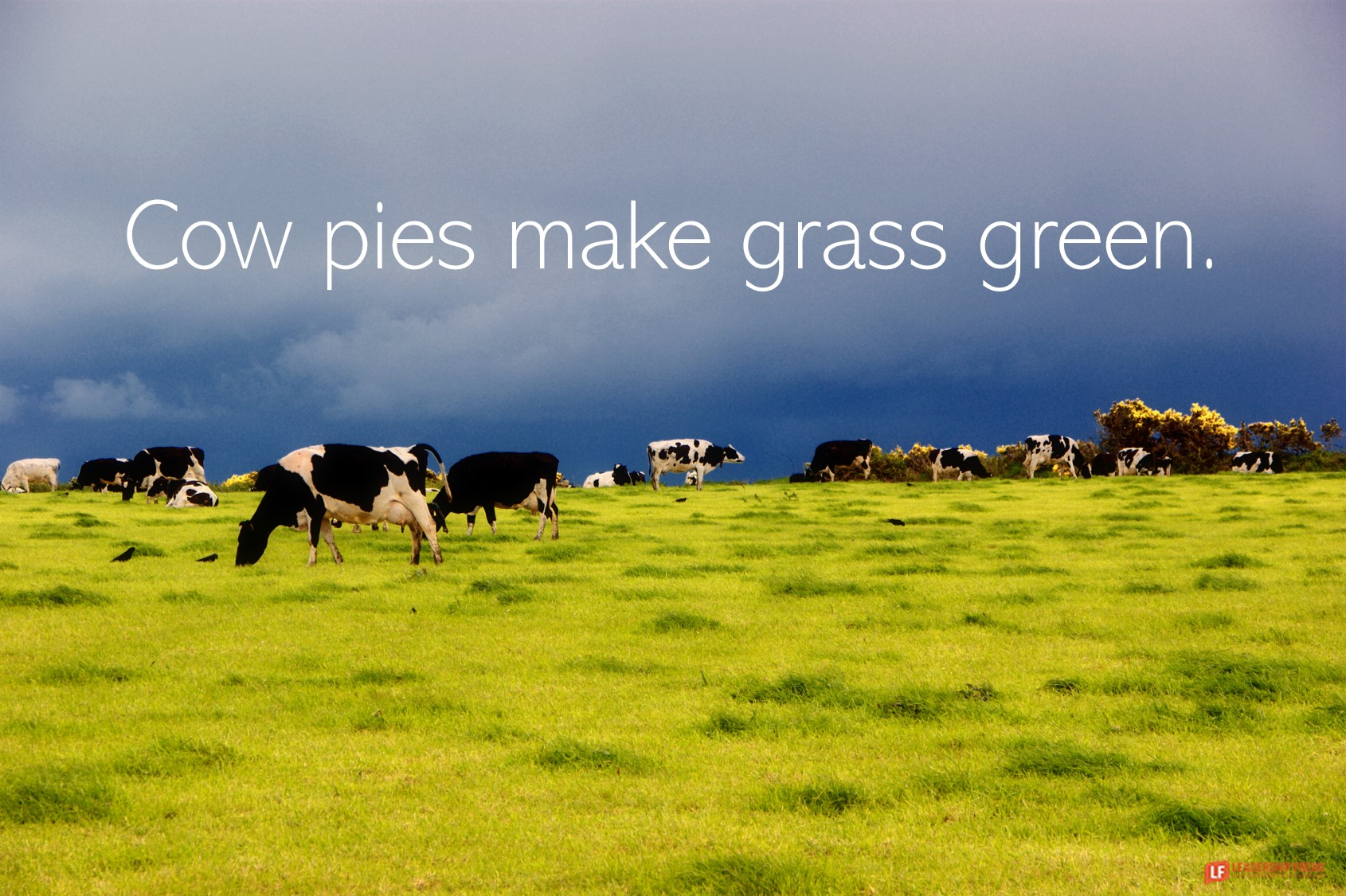 Cow Pasture  Cow pies make grass green.