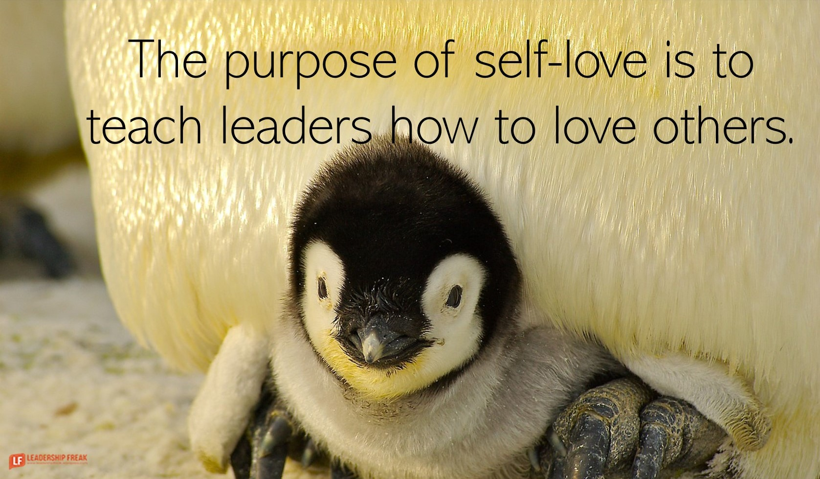 Baby penguin.  The purpose of self-love is to teach leaders how to love others.