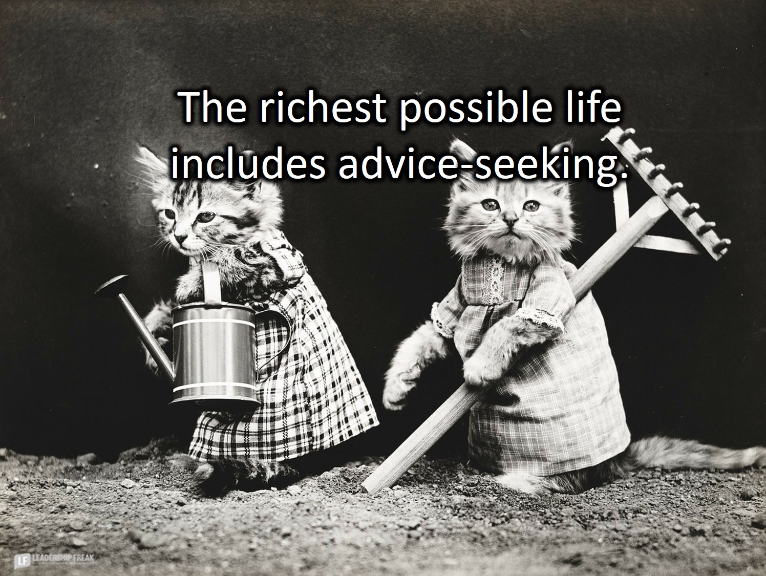 Cats gardening.  The richest possible life includes advice-seeking.