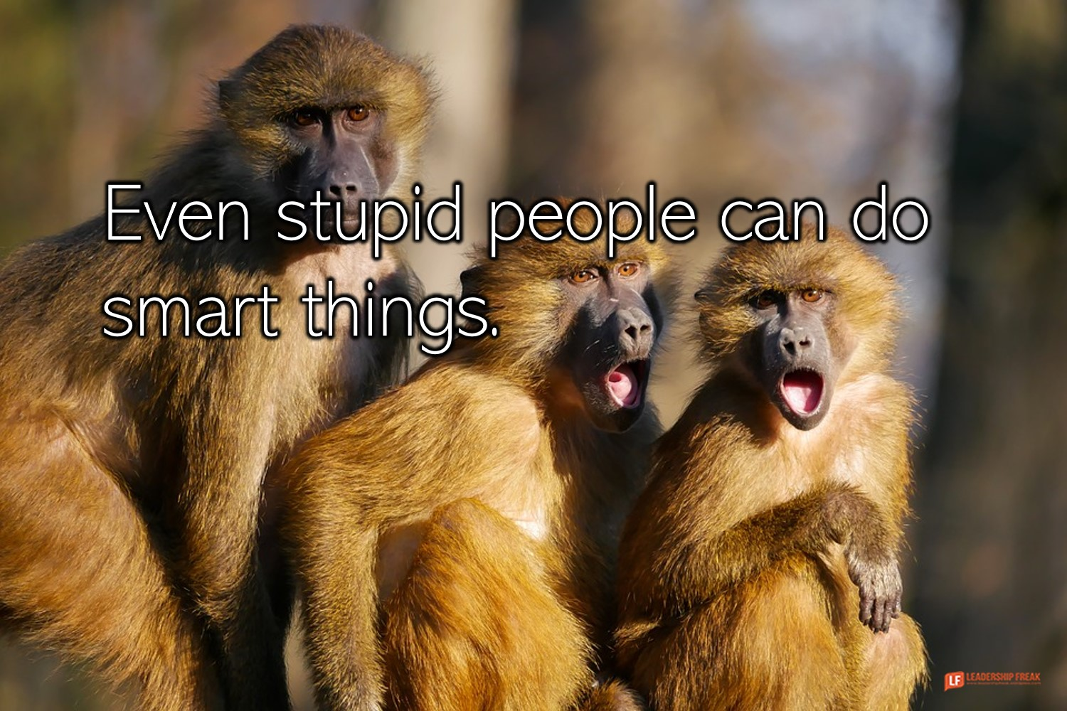 Monkeys  Even stupid people can do smart things.
