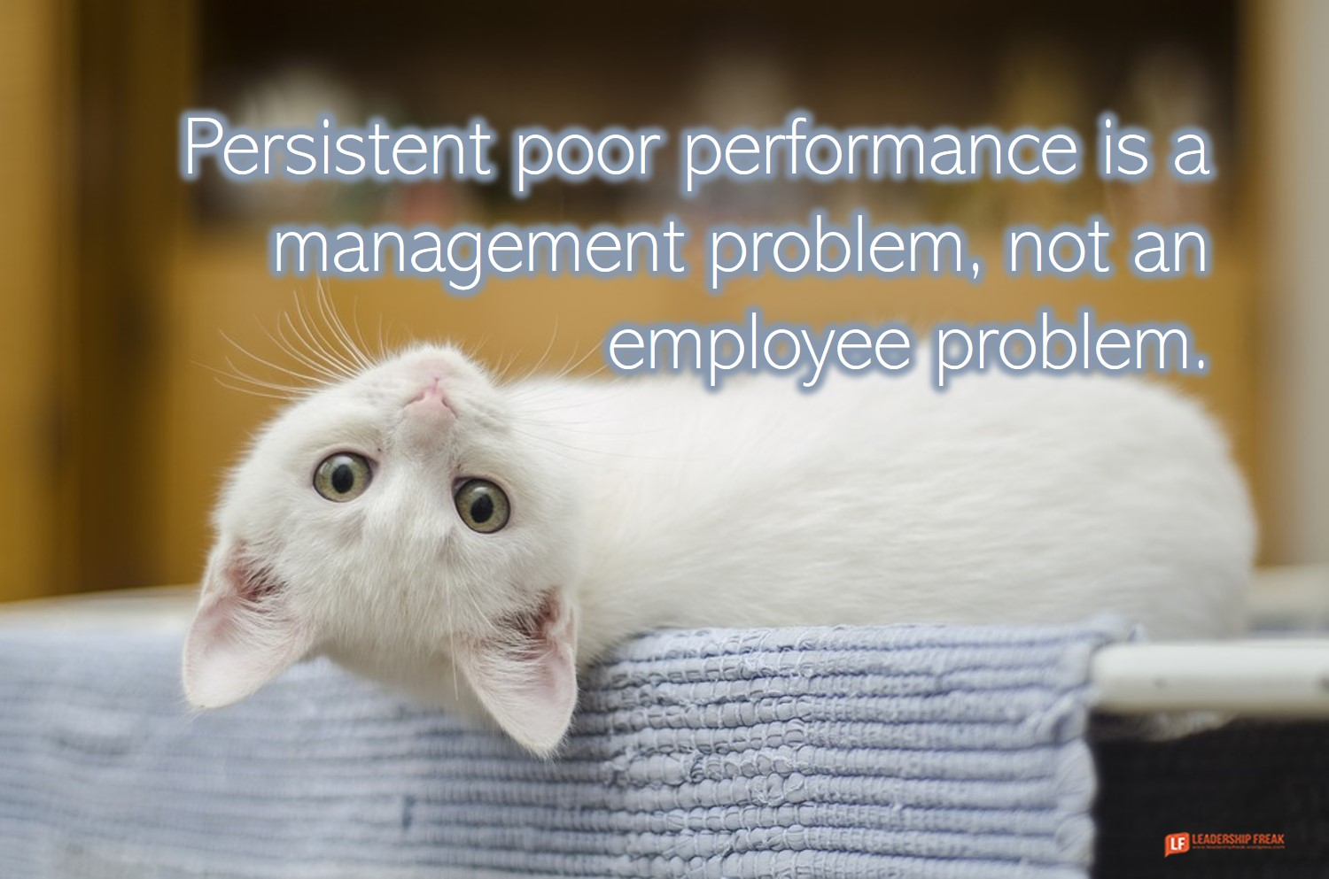 Upside down cat.  Persistent poor performance is a management problem, not an employee problem.