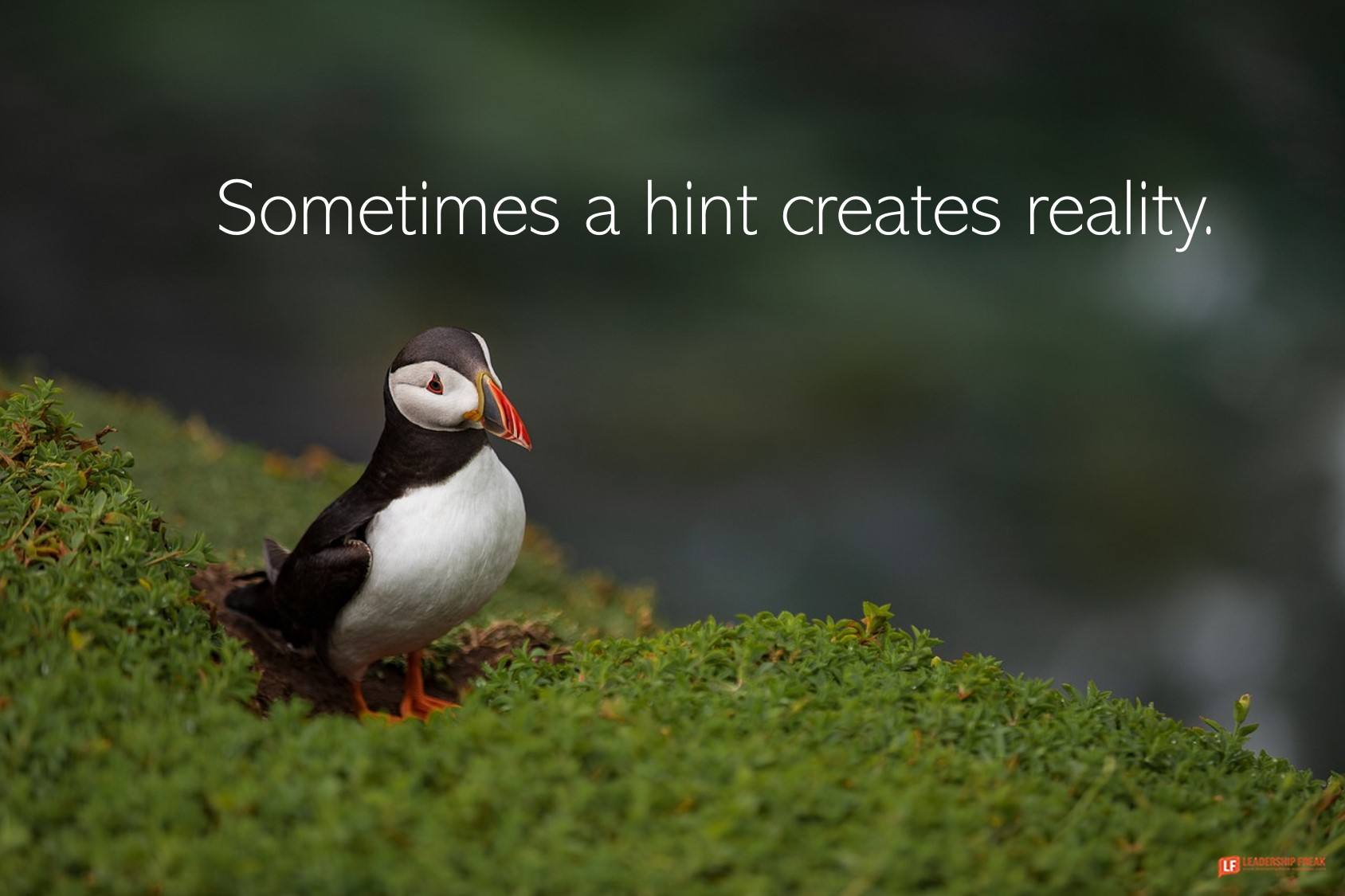 Puffin  Sometimes a hint creates reality.