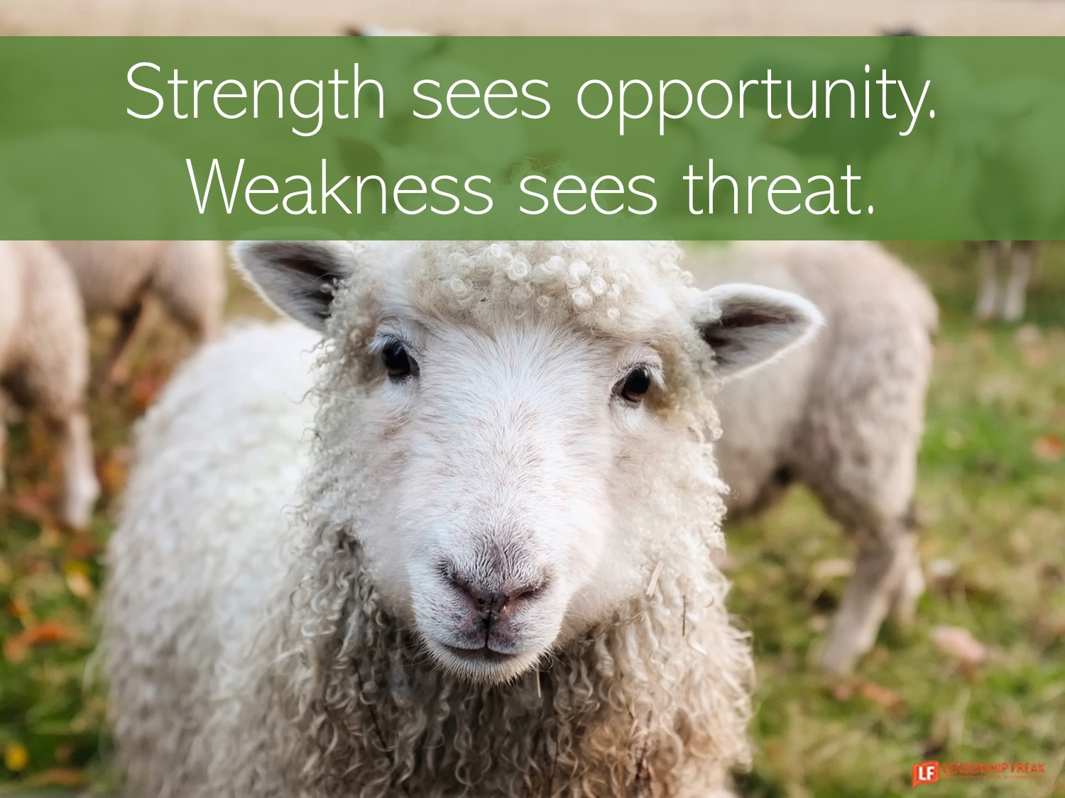 Sheep  Strength sees opportunity. Weakness sees threat.