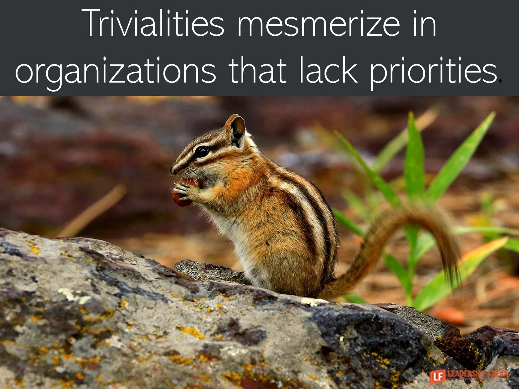 Chipmunk  Trivialities mesmerize in organizations without priorities.