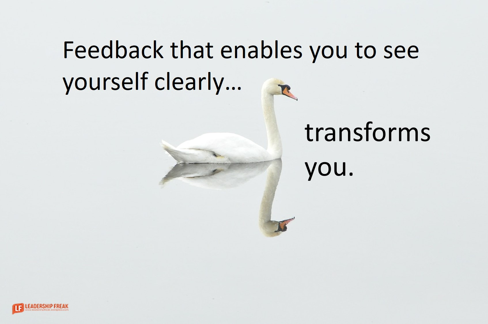 Swan. Reflection.  Feedback that enables you to see yourself clearly transforms you.