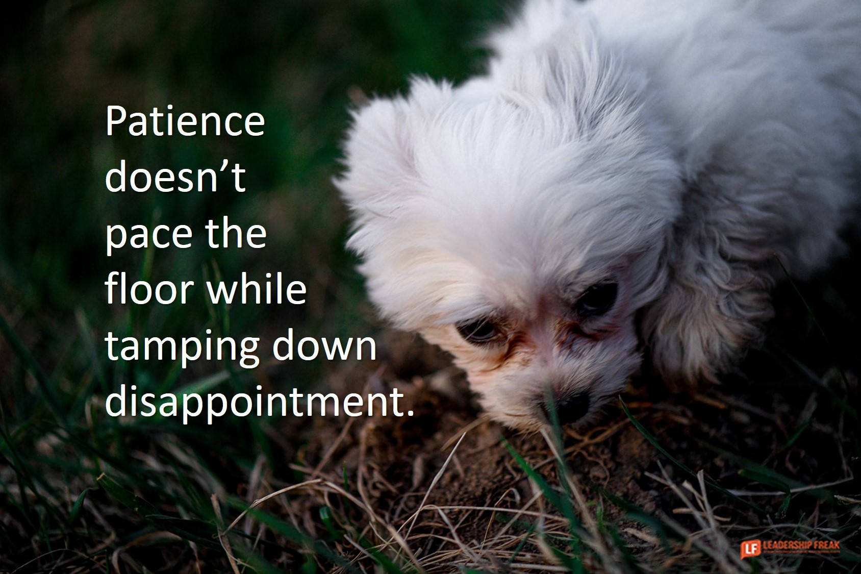 Disappointed puppy.  Patience doesn't pace the floor while tamping down disappointment.