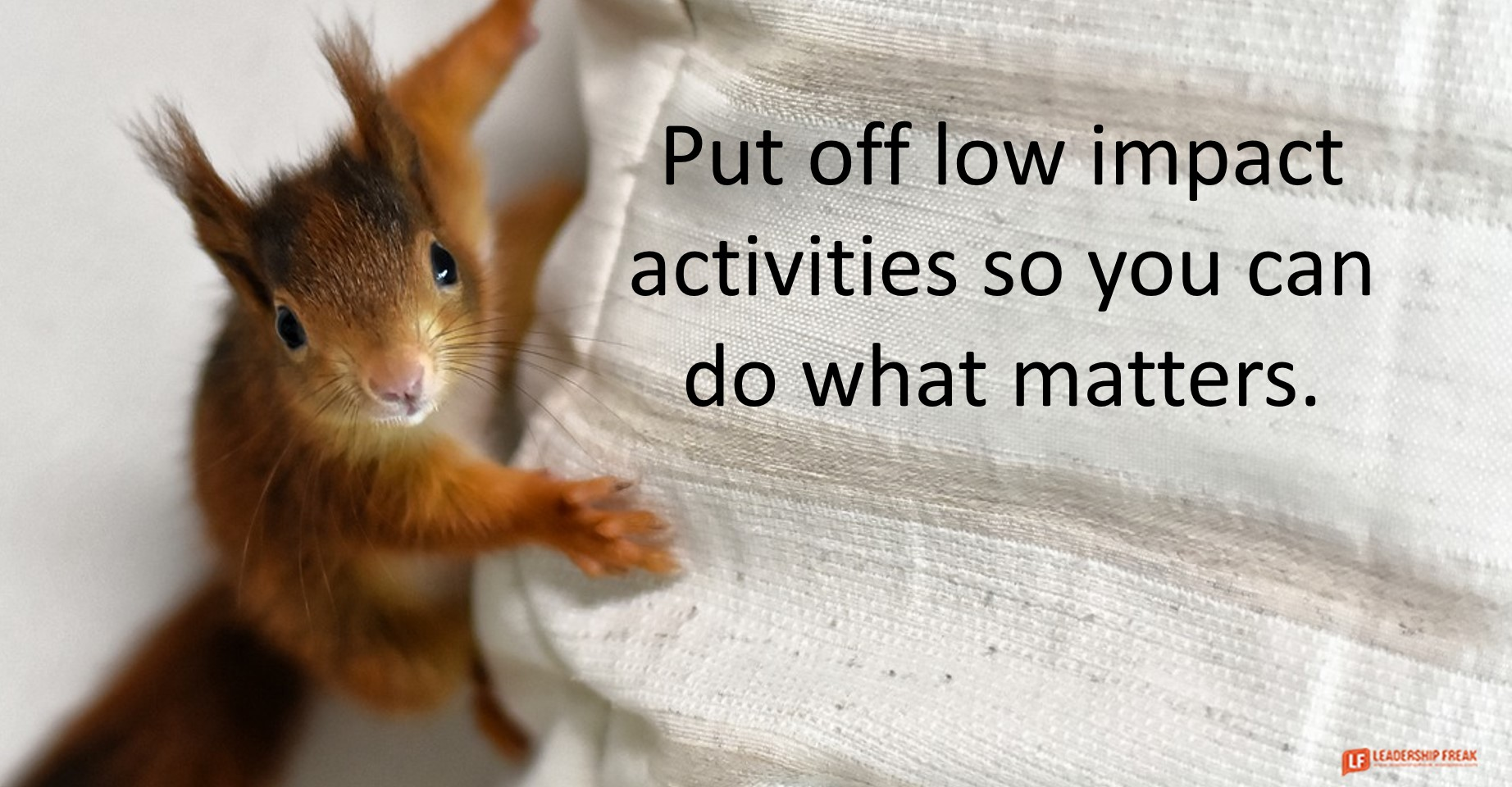 Squirrel  Put off low impact activities so you can do what matters.