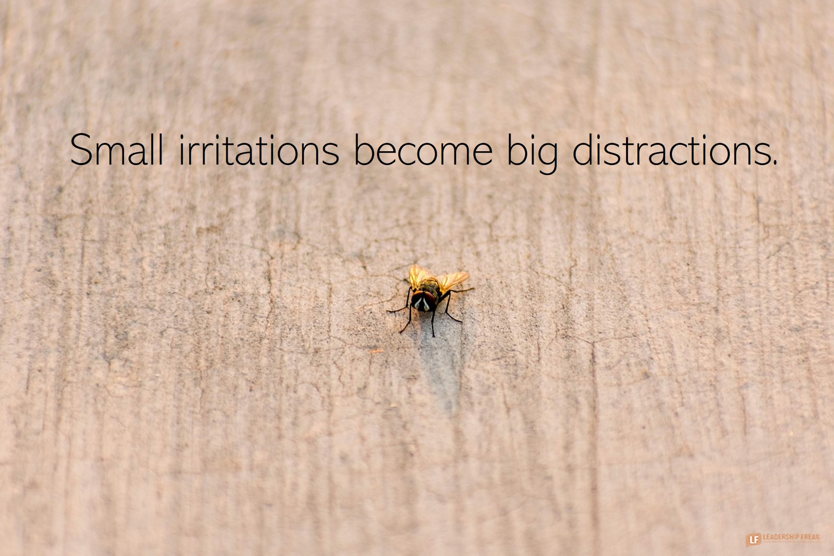 House fly.  Small irritations become big distractions.