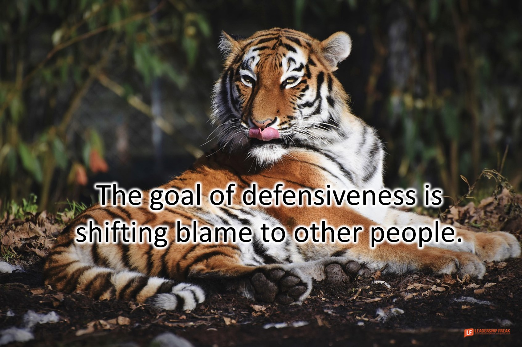 Tiger with its tongue out.  The goal of defensiveness is shifting blame to other people.