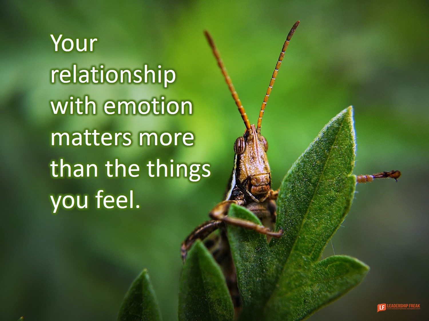 Emotion: What I Learned From Chasing Mom with a Plastic Bug