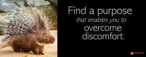 """Image of aImage of a porcupine. """"Find a purpose that enables you to overcome discomfort."""""""