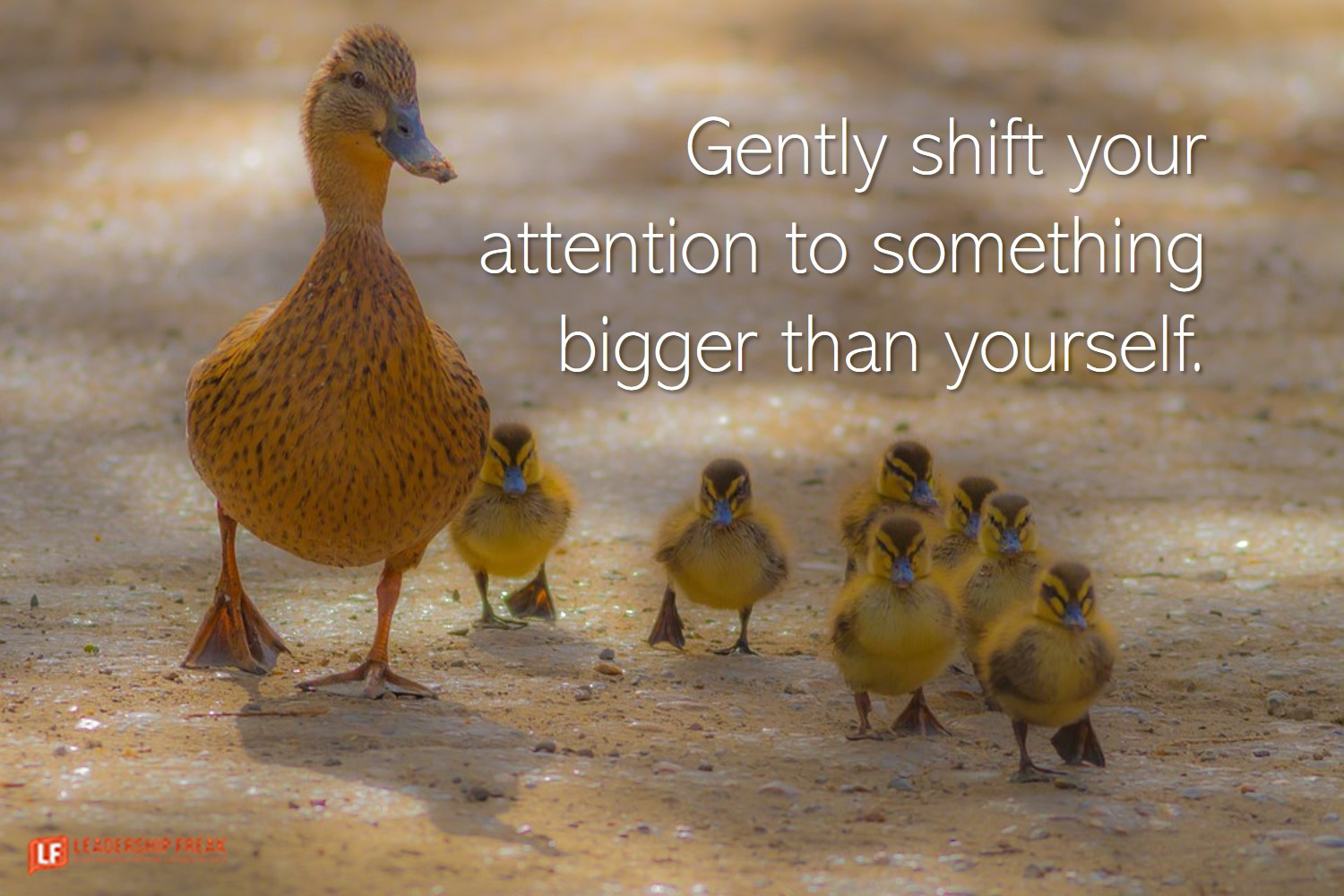 Mother duck watching over ducklings.  Gently shift your attention to something bigger than yourself.