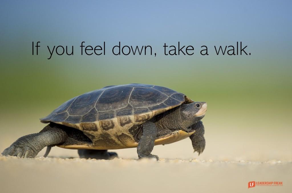 Turtle walking  If you feel down, take a walk.
