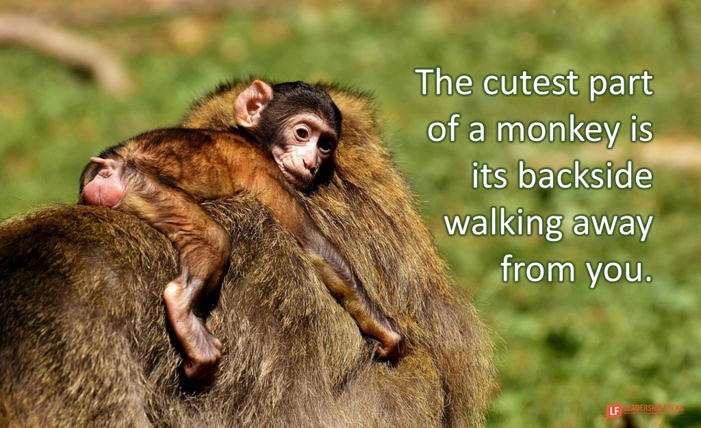 """Picture of a monkey riding on its parent's back. Quote, """"The cutest part of a monkey is its backside walking away from you."""""""