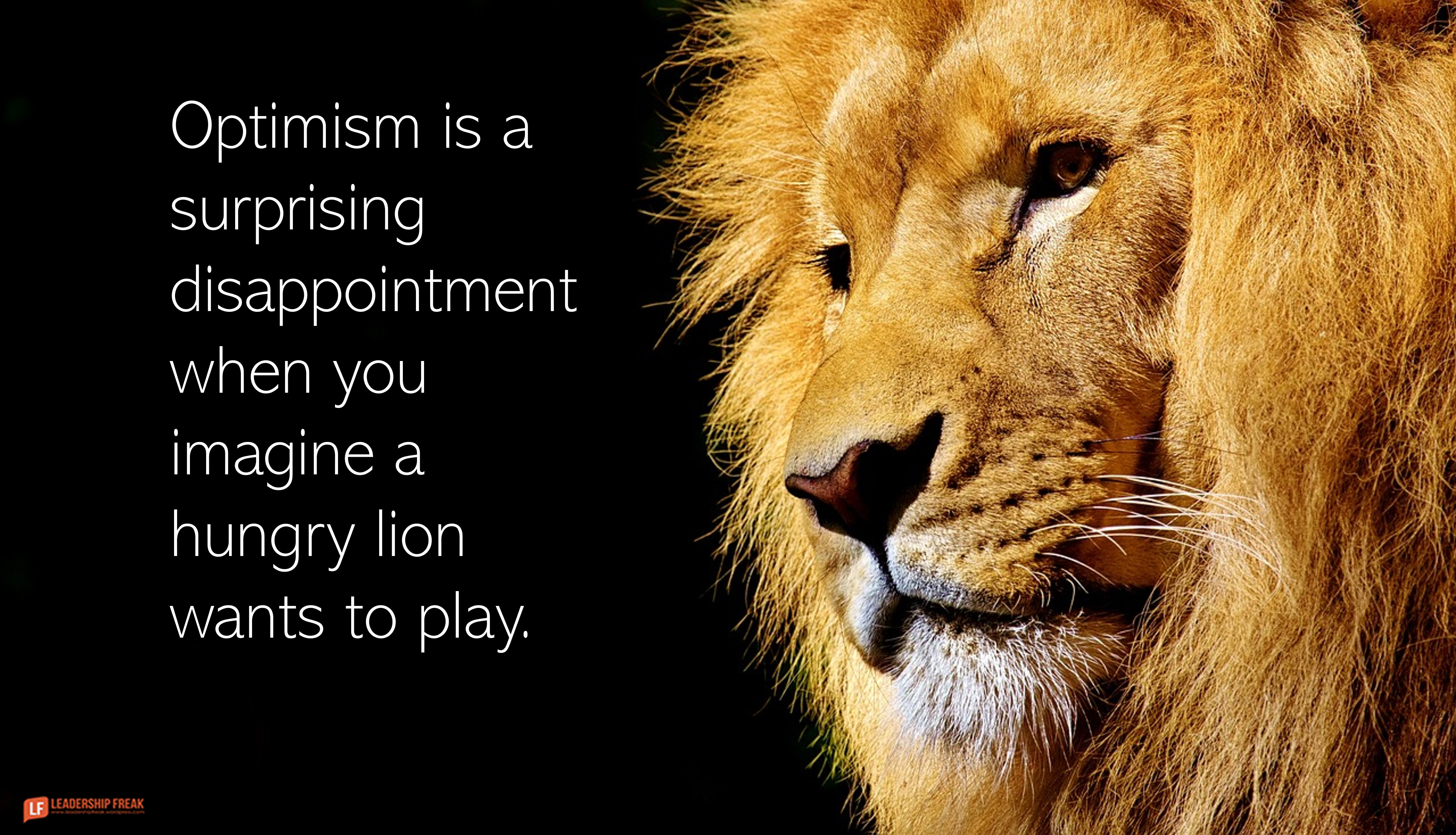 Lion  Optimism is a surprising disappointment when you imagine a hungry lion wants to  play.
