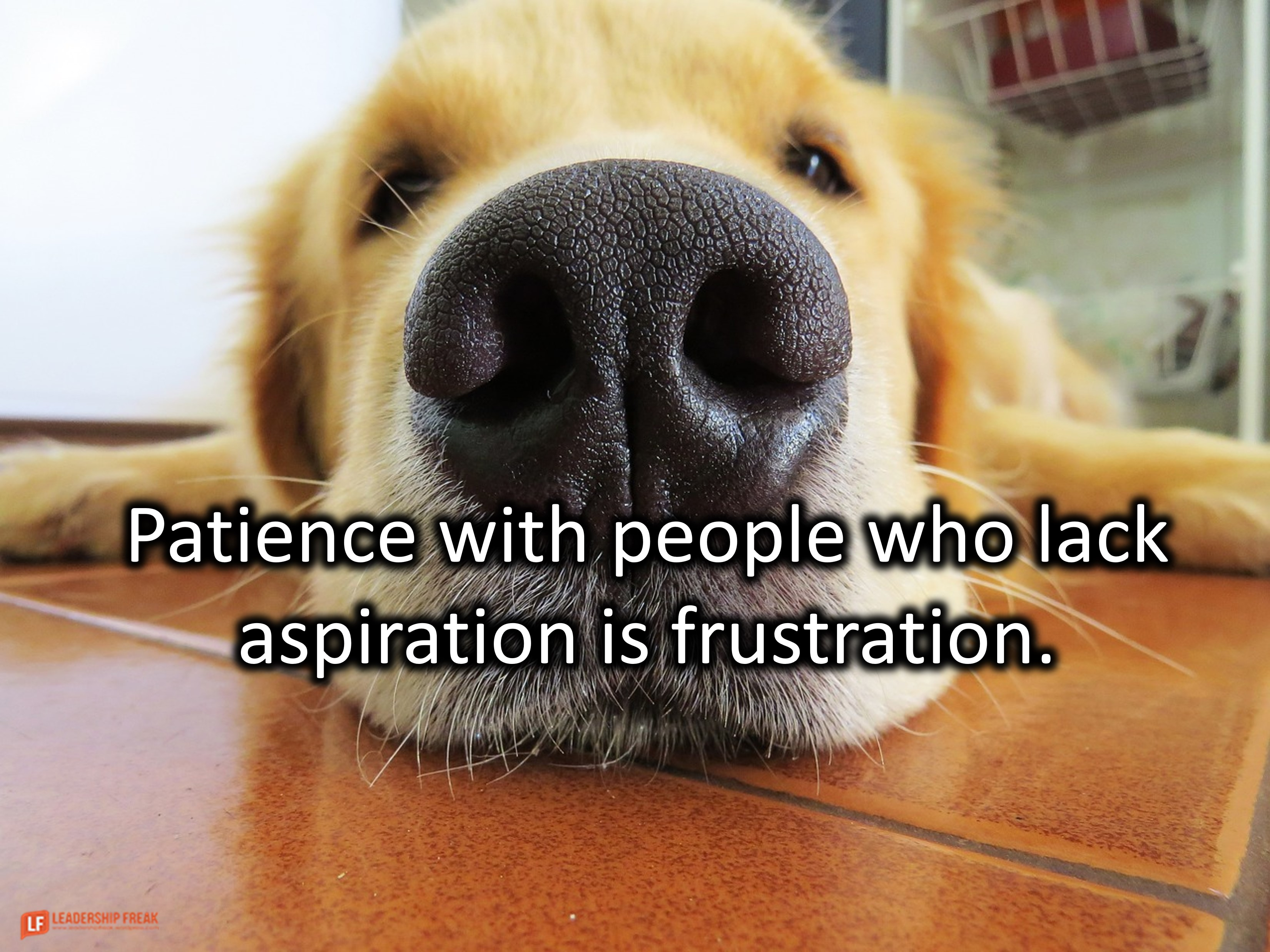 Lazy dog.   Patience with people who lack aspiration is frustration.