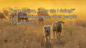 Image of a sheep dog leading a sheep.