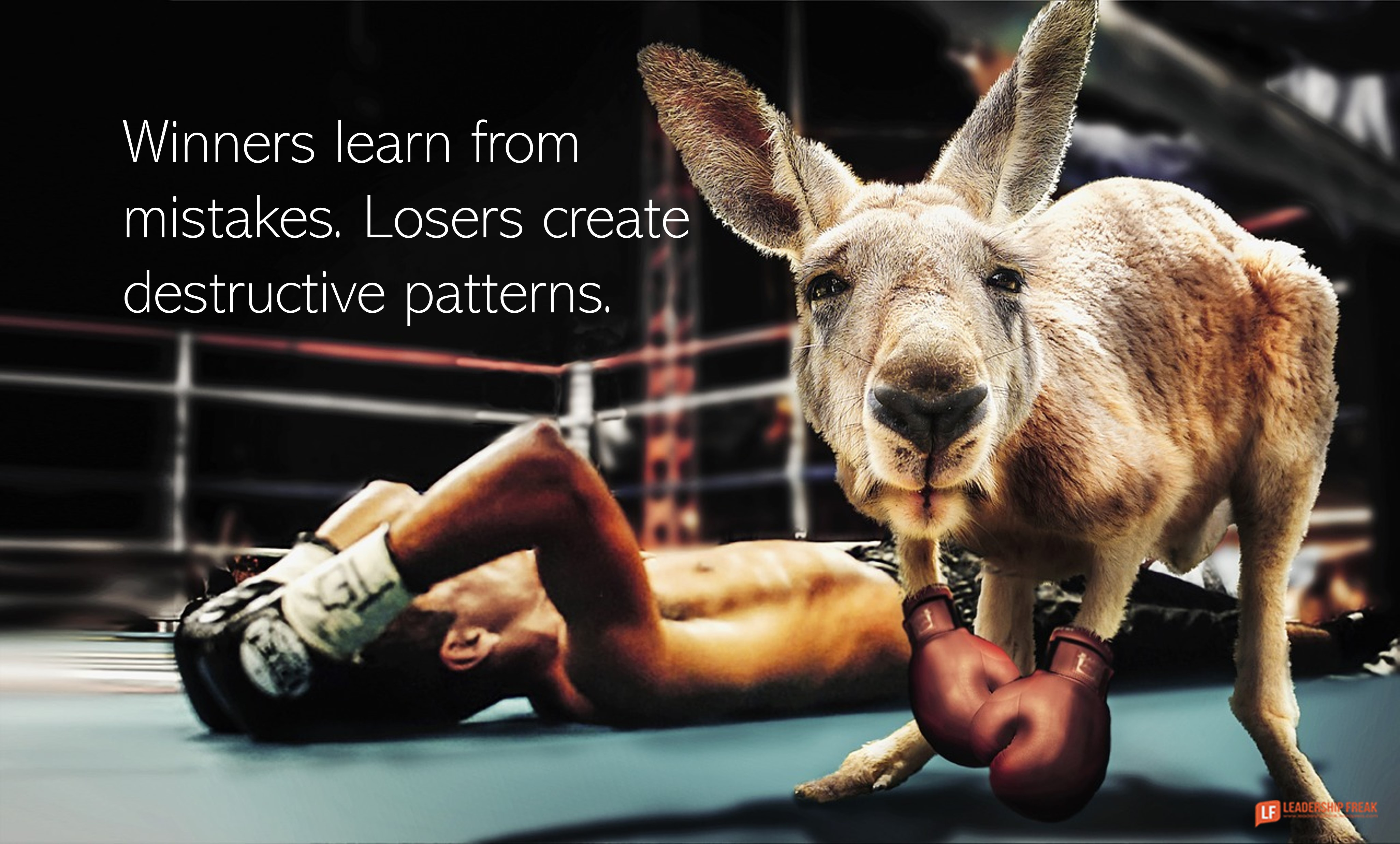 Kangaroo knocks out boxer.  Winners learn from mistakes. Losers create destructive patterns.