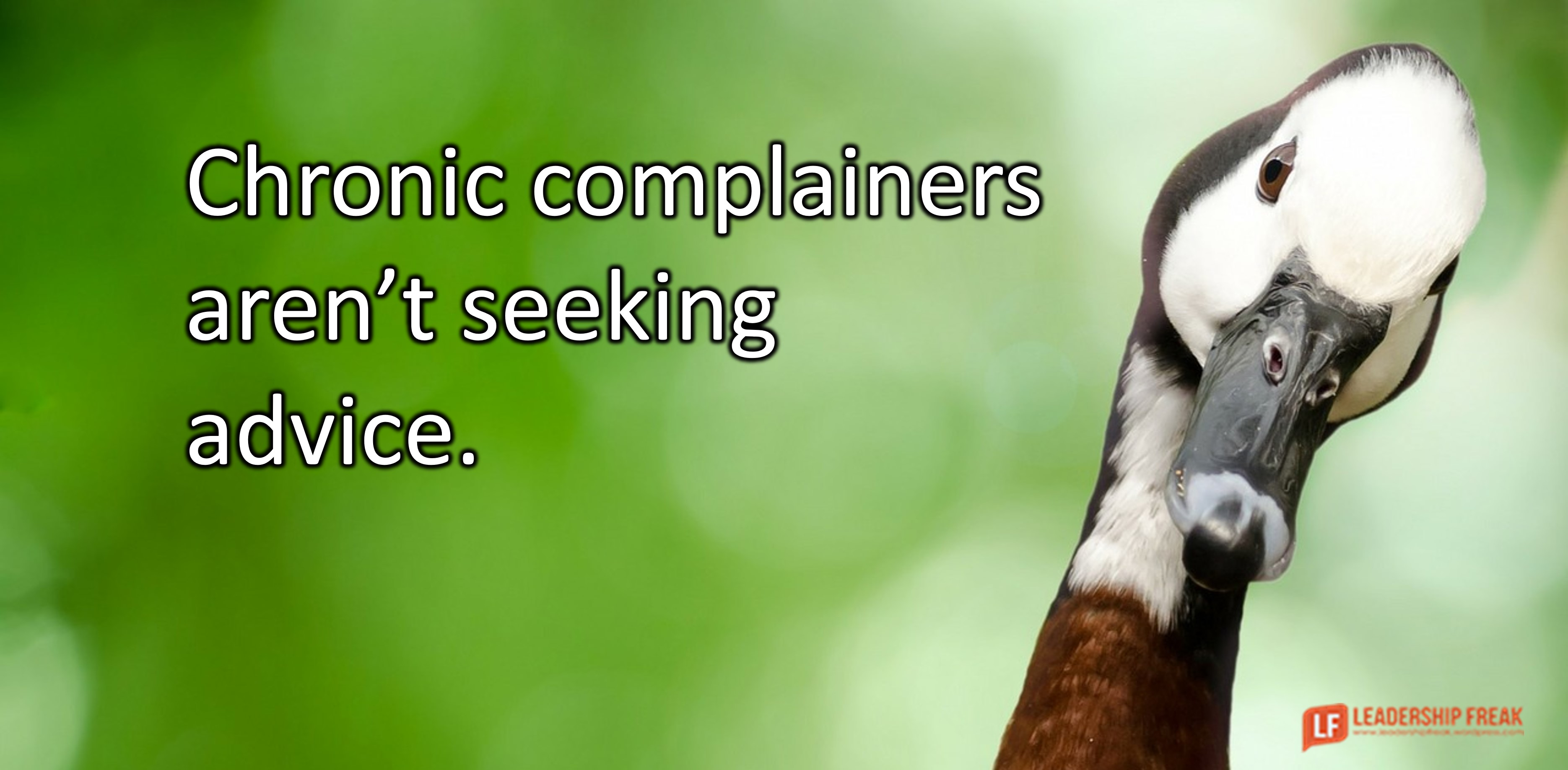 Goose with tilted head.  Chronic complainers aren't seeking advice.