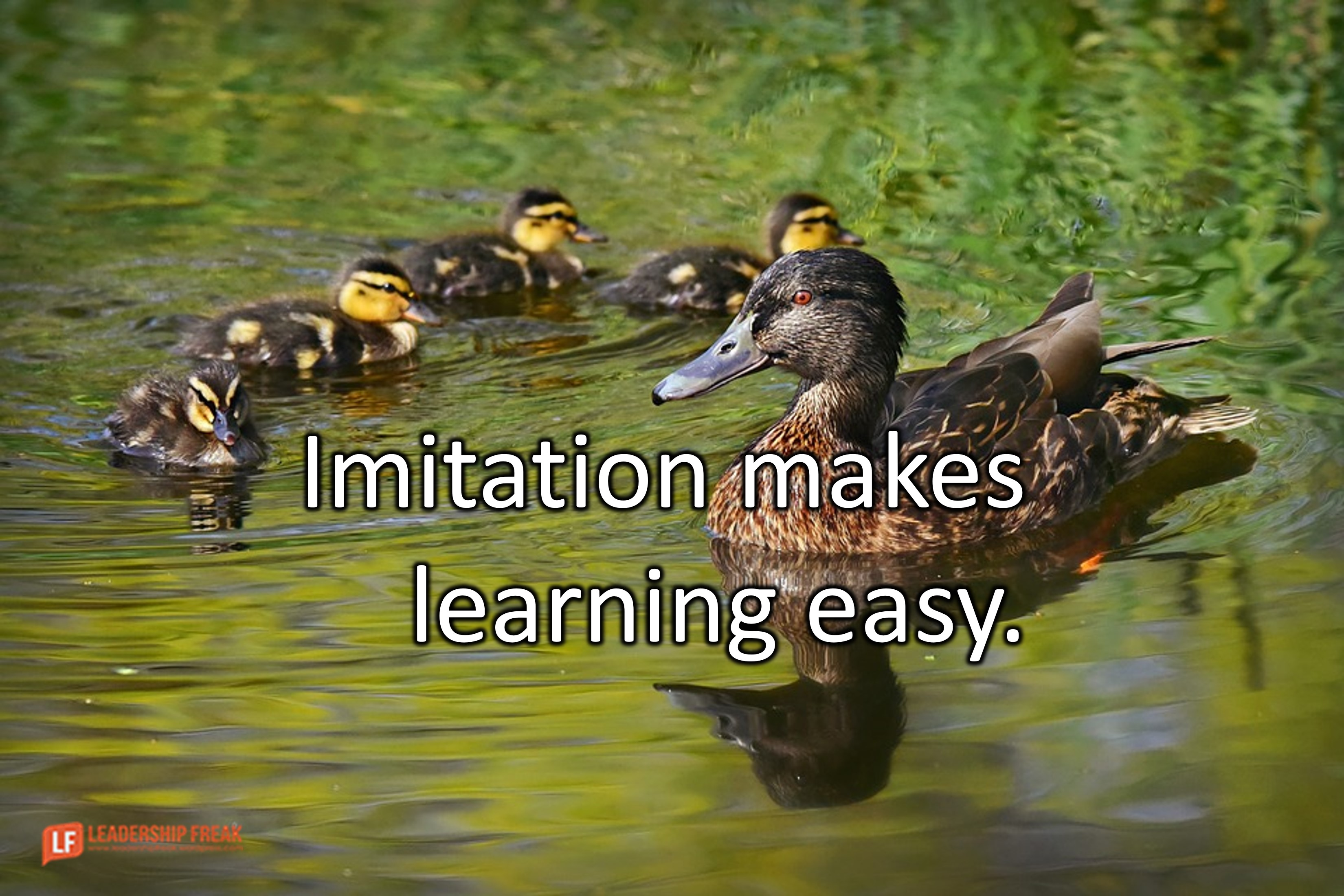 How We Really Learn to Lead