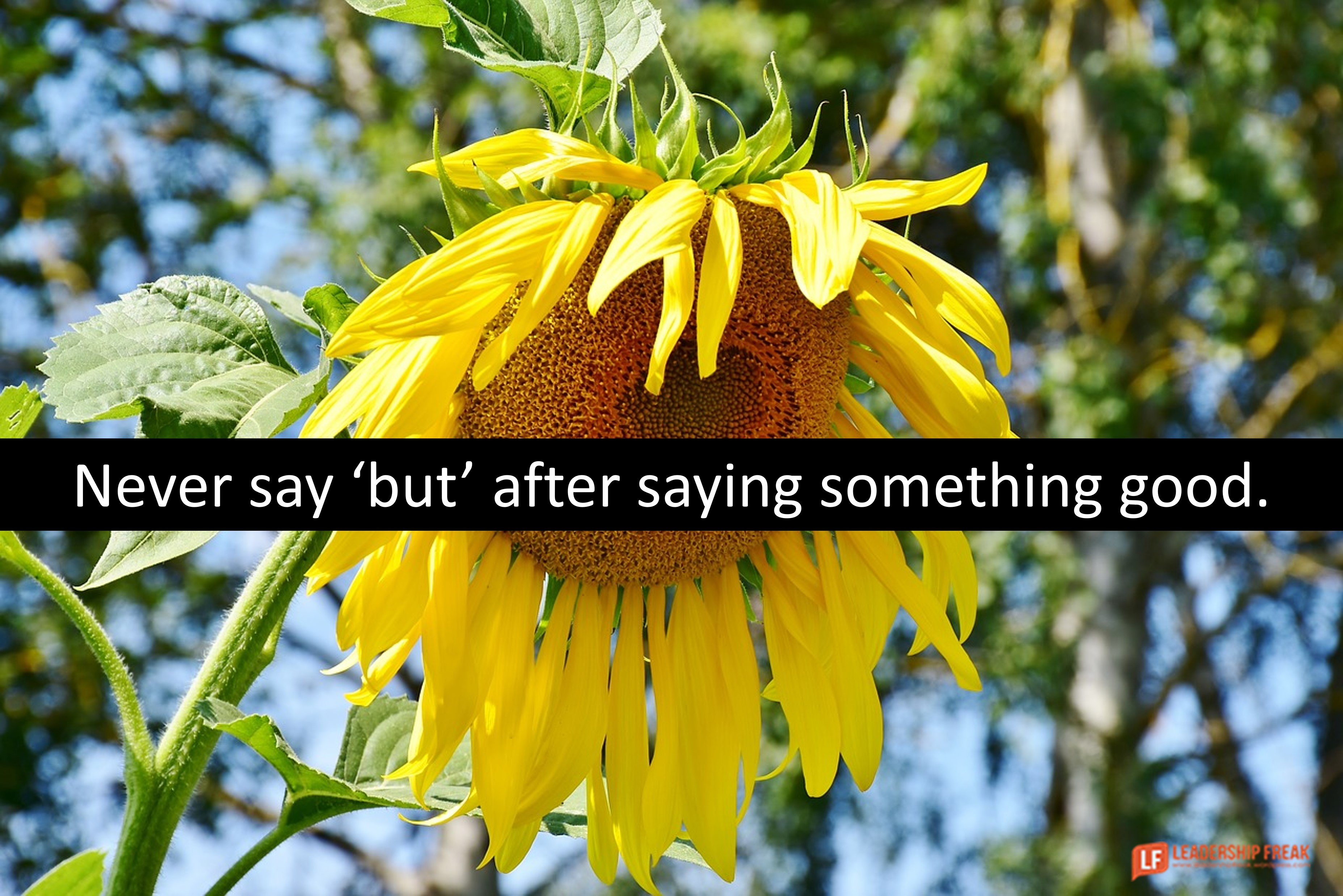 Wilting sunflower.  Never say 'but' after saying something good.
