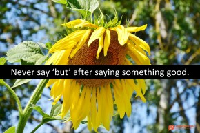 Image of a wilting sunflower.