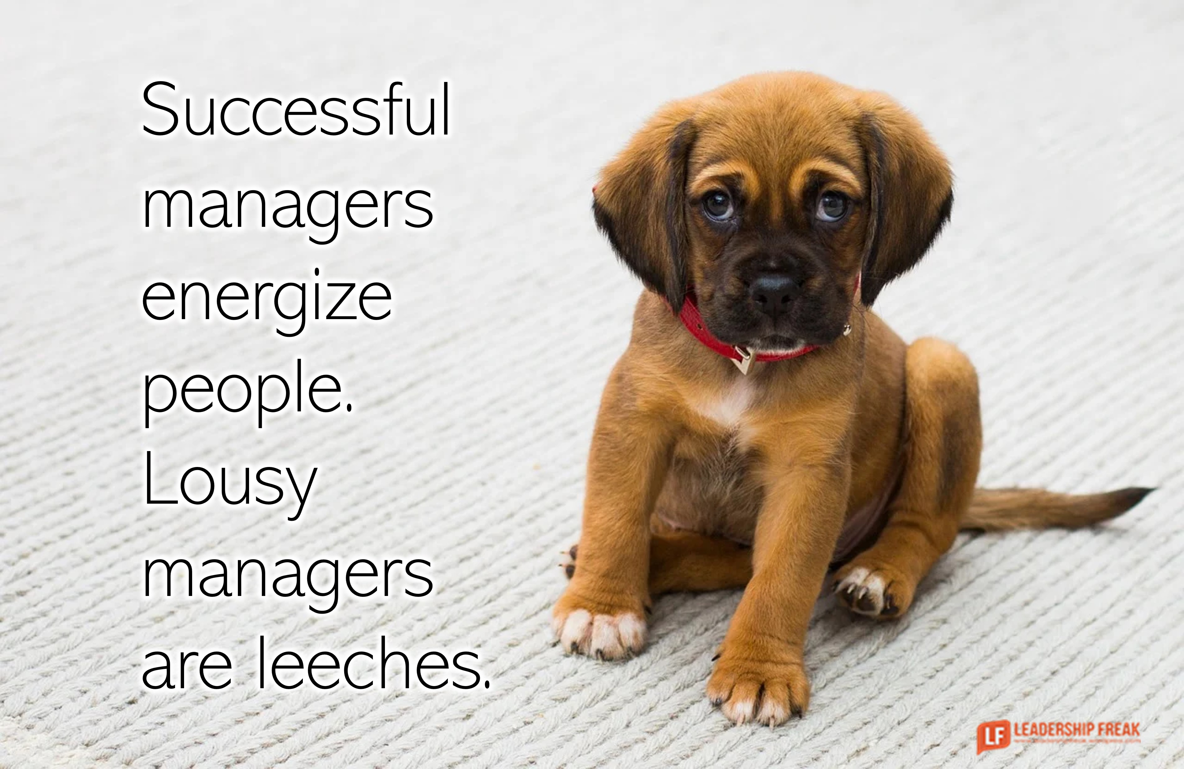 Sad puppy.  Successful managers energize people. Lousy managers are leeches.